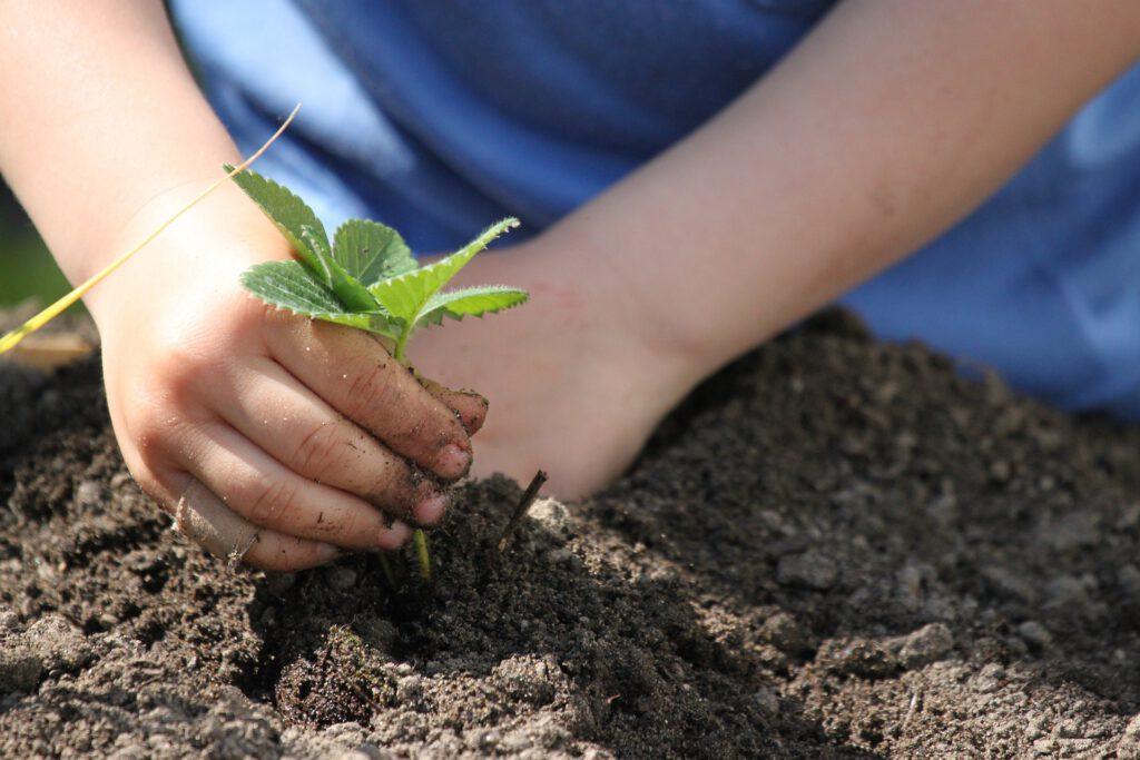 https://pixabay.com/de/photos/pflanzen-setzen-fr%C3%BChling-garten-4963049/